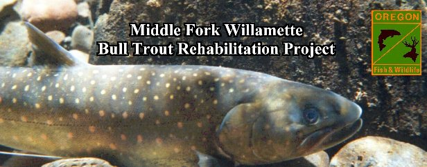 Mid-Willamette Bull Trout Rehabilitation Project